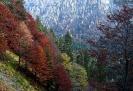 Autunno in Val Pesarina