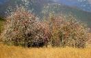 I colori del Monte Cuar